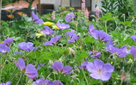 La primavera nella Marca Trevigiana